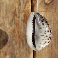 Natural Cowrie Shell Light Pull | Decorative Light Pull | Light Pull Switch